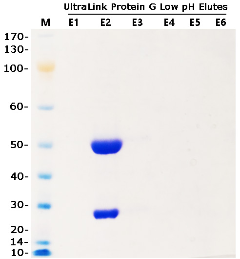 293 expression of Mouse IgG1 and UltraLink ProG purification
