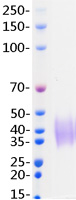 PDCD1 protein from Human 293 cells